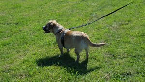 liverpool dog kennels22
