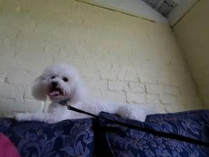 liverpool dog kennels45